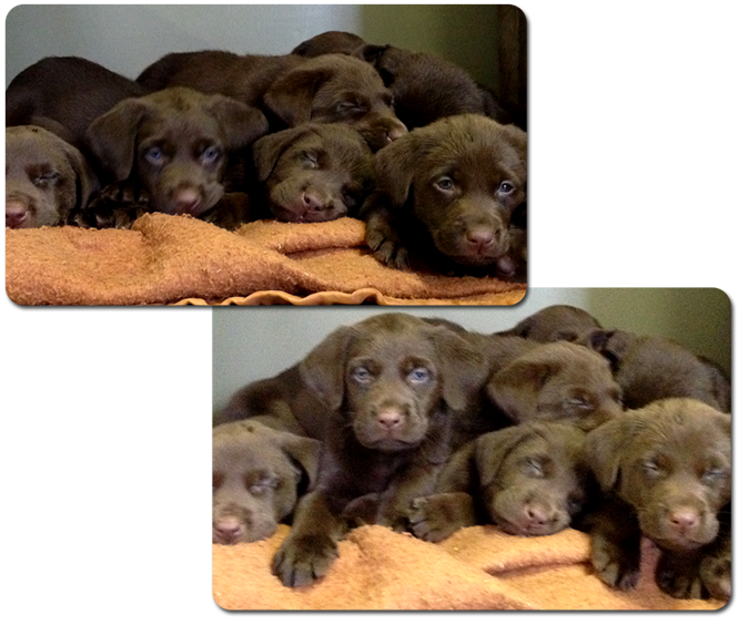9 Puppies Born December 23, 2013
